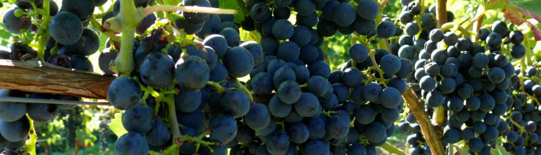 Niederau an der saechsischen Weinstrasse