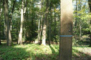 markierter Baum