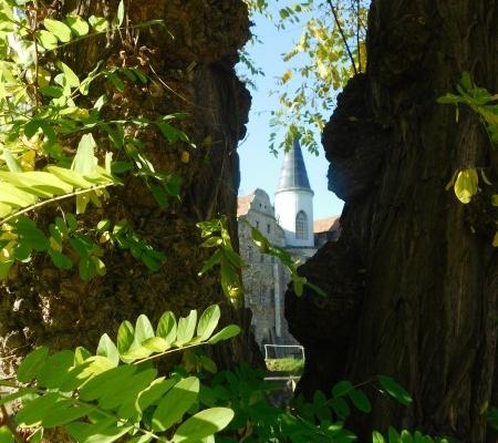 Baumdurchblick auf Schloss